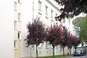 Rue de la Charme